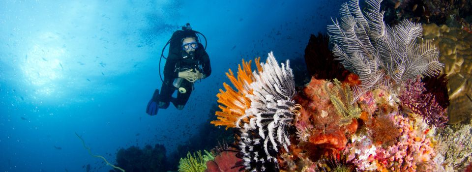 Diver looking at reef