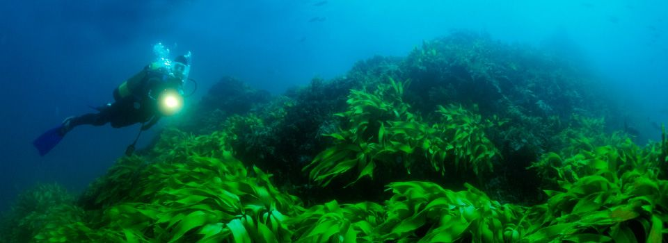 Bright green sea life