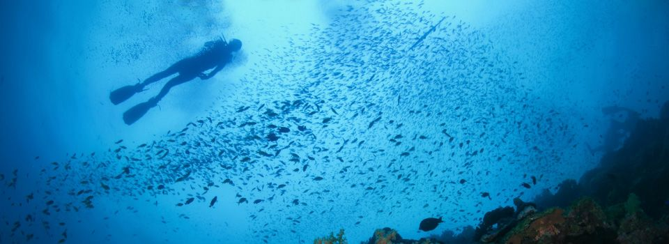 Diver swimming with schools of fish