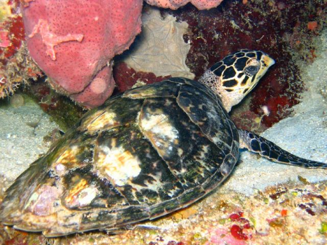 Sea turtle on sea floor