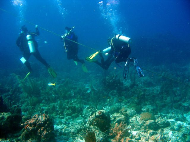 Divers using underwater line