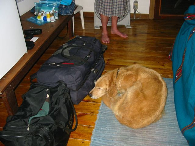 Dog sleeping by luggage